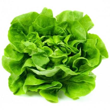 Salată verde / buc